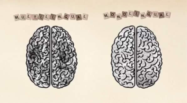 Monlingual vs Bilingual Brain