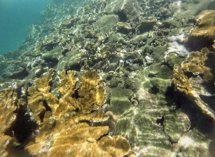 Snorkeling Zapatilla