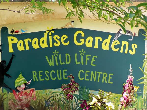 Please Continue The Wildlife Rescue Amp Release Mission In Boquete
