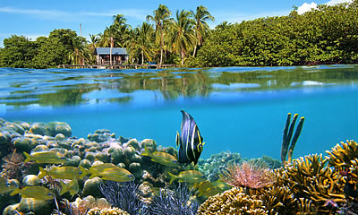 Fishes and Sea life in Bocas del Toro, Panama