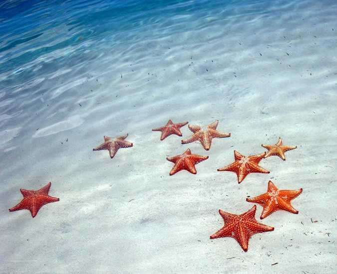 Image Result For Starfish Island Cayman