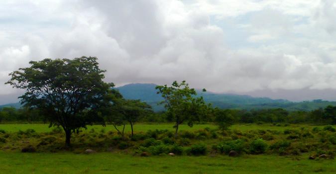 Vegetation surrounding the Chiriqui River