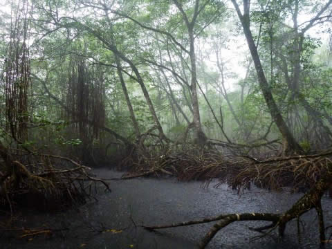 We were glad to take shelter during the rain at the San San Pond Sak Reserve