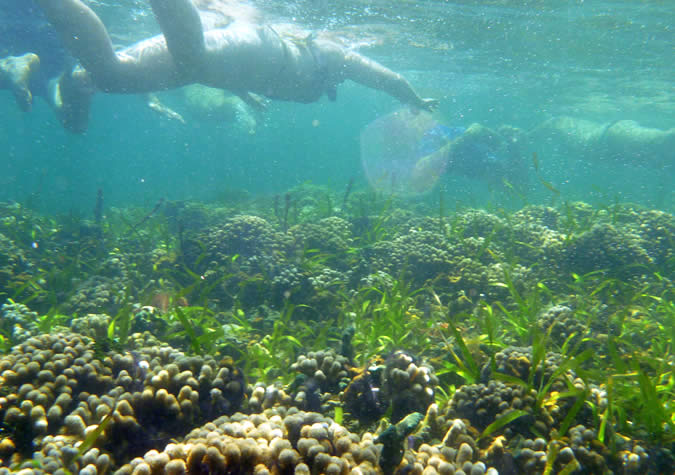 Nice and healthy coral and abundant marine life by the mangroves on the Southeast of Bastimentos Island