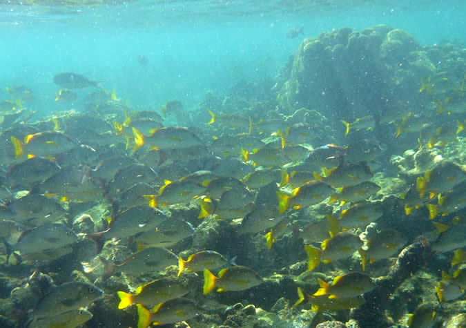 Lots of fishes in this open water reef by Zapatillas Island... I simply loved it!