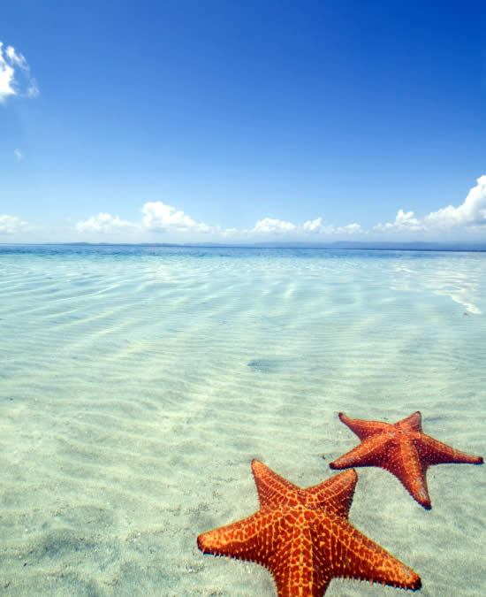 Starfish Beach in Bocas del Toro is simply one of Panama's most stunning beaches