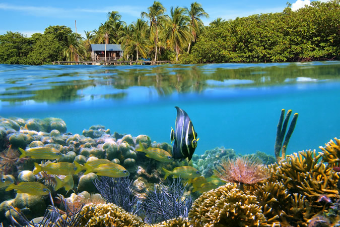 Bocas' underwater world awaits to be explored... get out there!