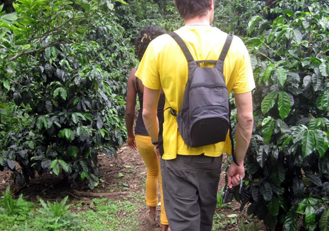When you walk around Don Tito's coffee plantation, you can literally feel the love put into this farm