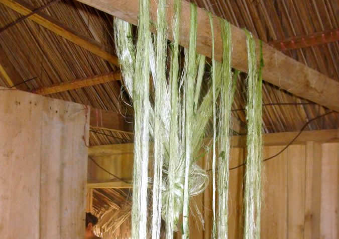 The finished fiber strands drying (pita plant).
