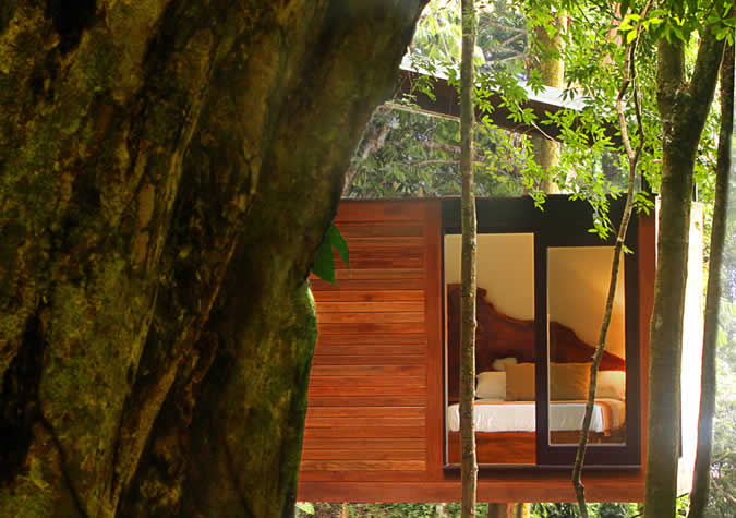 The Estate Rooms nestled between the old-growth trees along Isla Palenque's Playa Primera