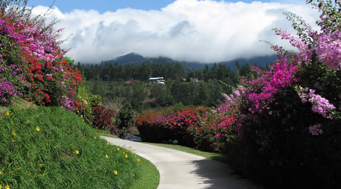 The mountains of Boquete offer stunning views and the temperature makes the walks nice and fresh