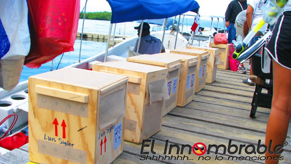 Crates with pygmy sloths destined for Dallas World Aquarium. (Photo courtesy of Jahir Amir Torres via The Bocas Breeze)