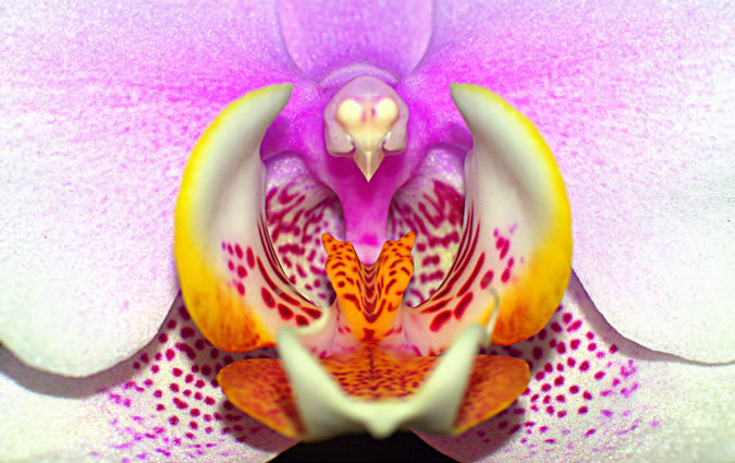 Over 2000 species of orchids you'll be able to find at the Dracula Farm in Cerro Punta.