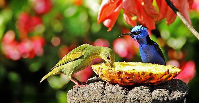 If you're coming to Boquete with some birding in mind, the Boquete Garden Inn should top your list.