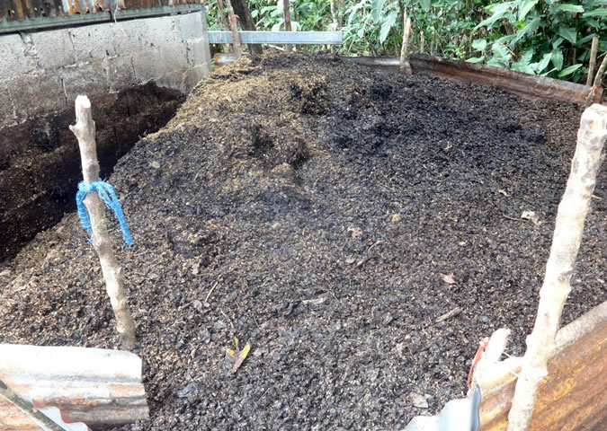 Don Tito is always coming up with new ideas but currently he is devoting most of his time to his coffee farm which is obviously very labor intensive. Here you can see organic fertilizer made from coffee husks and other organic byproducts from the production process.