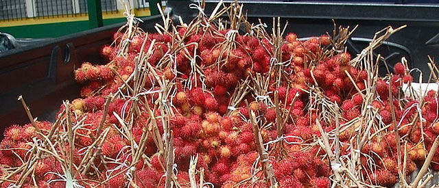 Mamón Chino or Rambutan