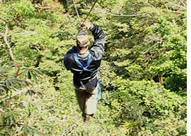 Rainforest Canopy  Zipline Adventure - Tour Dispatch - Shore
